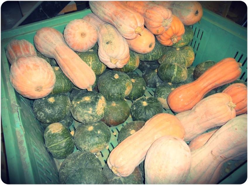 Loads of Pumpkins