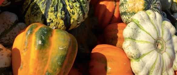 Swiss Pumpkins